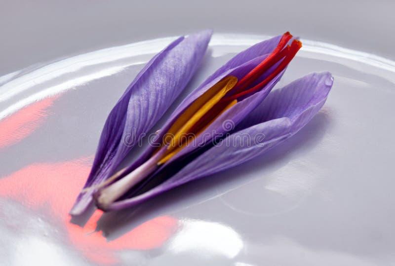 De Ontlede Bloem van de Krokus van de saffraan, stock fotografie