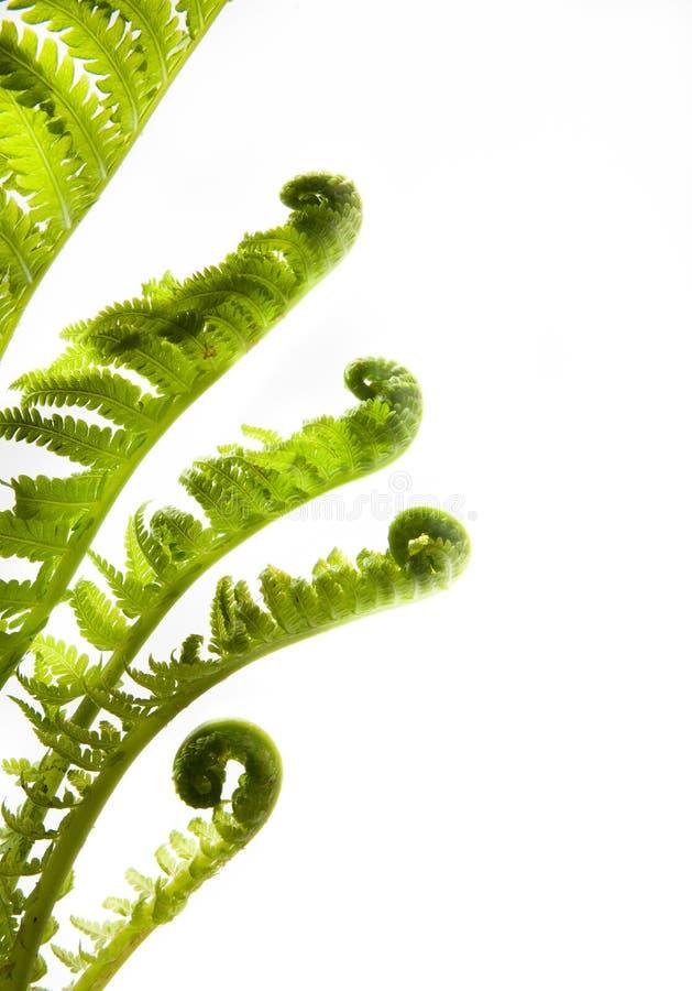 De ontwikkeling van de kunst. bladeren van de lente op witte backg royalty-vrije stock afbeelding
