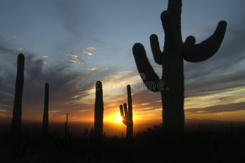 De onweerswolken bouwen bij zonsondergang in de Woestijn van Sonoran van Arizona royalty-vrije stock afbeelding