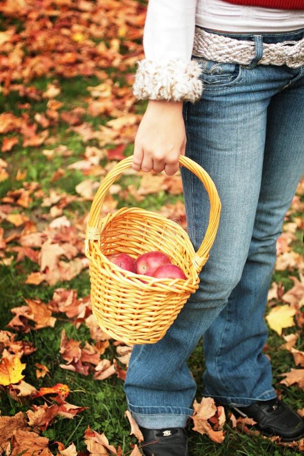 De oogst van de appel royalty-vrije stock foto's