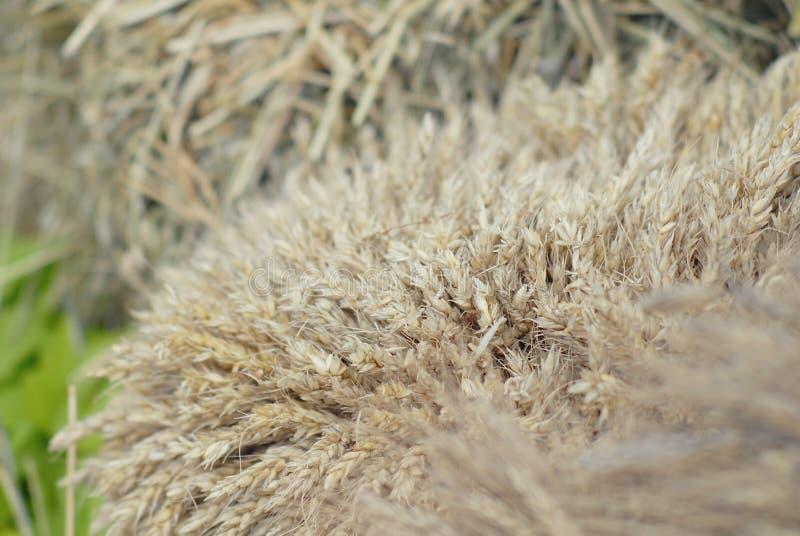 De oogst van graangewassen Verzamelde schoven royalty-vrije stock afbeeldingen