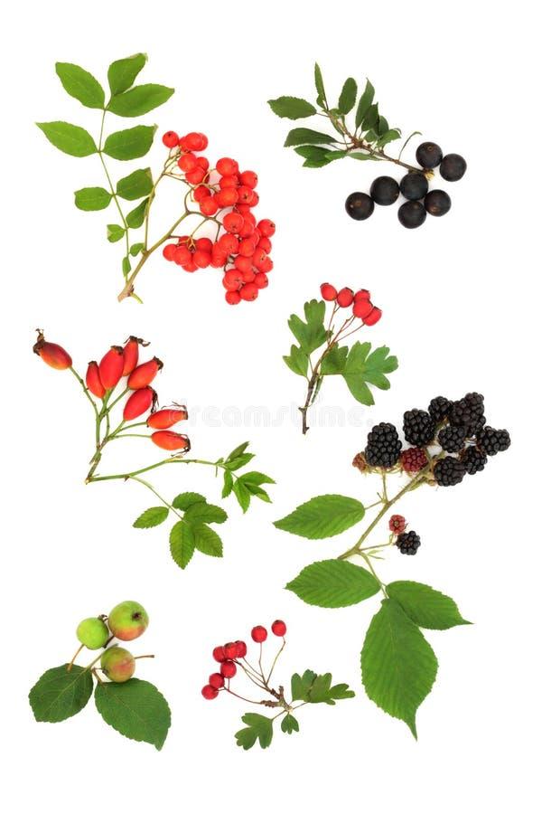 De Oogst van het Fruit van de herfst royalty-vrije stock afbeelding