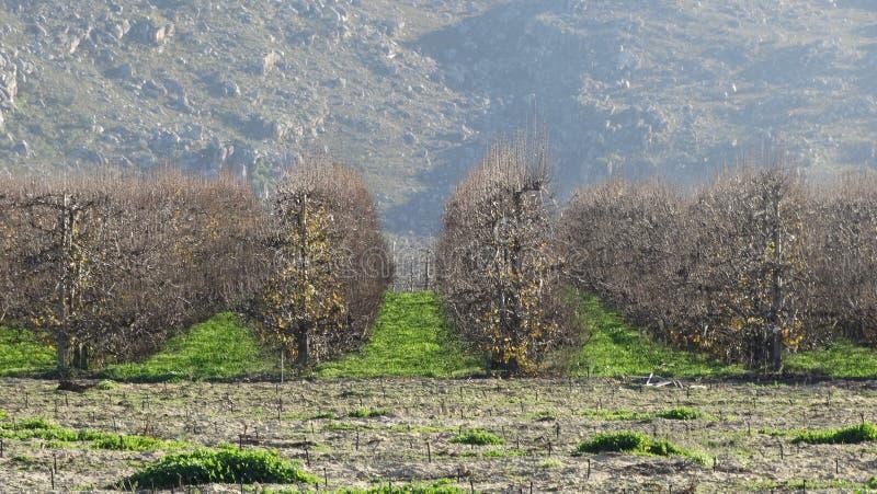 De oogst van het fruitlandbouwbedrijf stock afbeeldingen