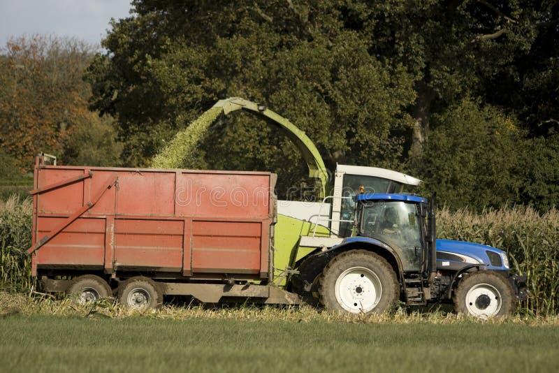 De oogst van het graan royalty-vrije stock afbeeldingen