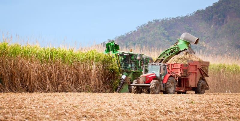 De oogst van het suikerriet royalty-vrije stock afbeelding