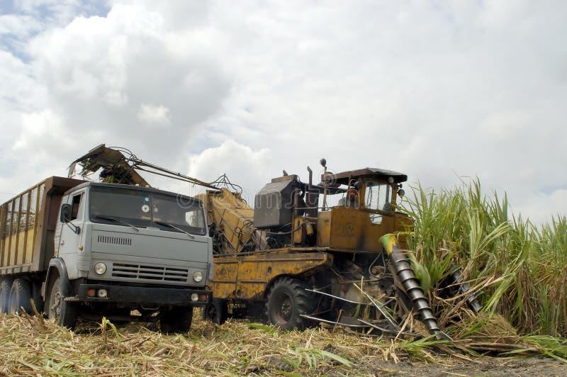 De oogst van het suikerriet in CUBA royalty-vrije stock foto