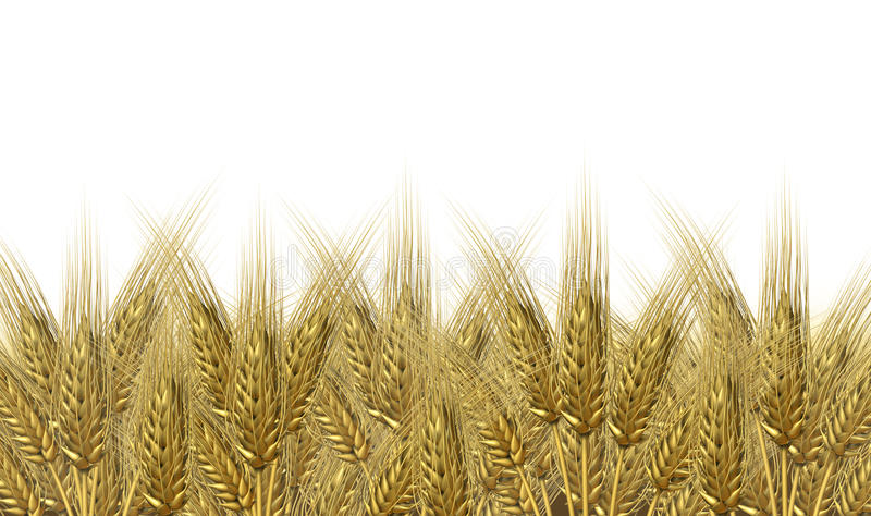 De oogsthorizon van de tarwe royalty-vrije illustratie