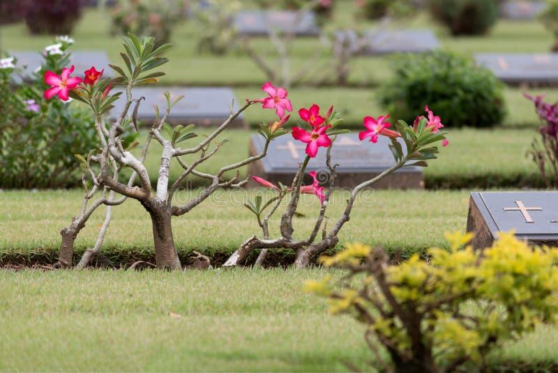 De Oorlogsgraven van de Commonwealth, Chungkai-Oorlogsbegraafplaats in Kanchanaburi Thailand stock afbeelding