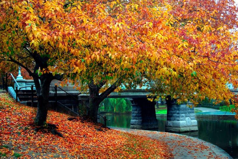 De Openbare Tuin van Boston stock afbeelding