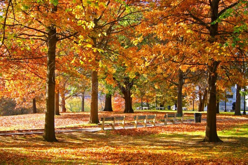 De Openbare Tuin van Boston stock afbeeldingen
