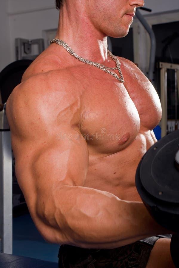De opleiding van de bodybuilder stock foto's