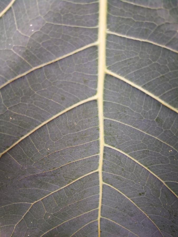 De oppervlakte en de strepen van bruine bladeren stock foto