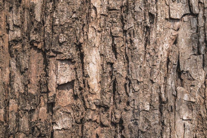 De oppervlakte van de boomschors in bos royalty-vrije stock afbeeldingen