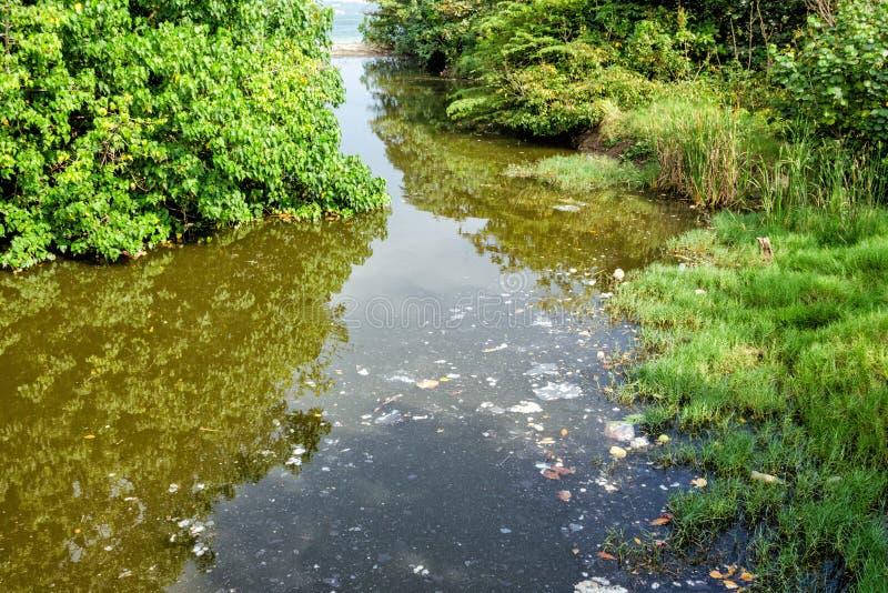 De oppervlakte van het waterreservoir onder bomen is vervuild met puin en stevig afval in vorm van vlekken stock foto