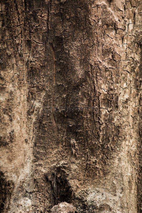Download De oppervlakte van hout. stock afbeelding. Afbeelding bestaande uit detail - 39105245