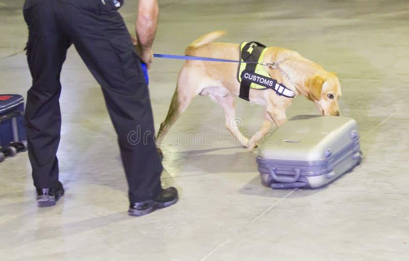 De opsporingshond van douanedrugs stock afbeelding