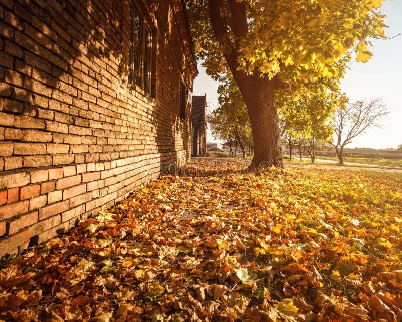De oranje bladeren van de achtergrondgroepsherfst Openlucht royalty-vrije stock afbeelding