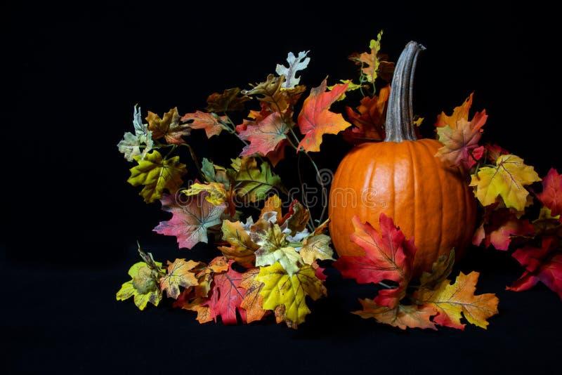 De oranje bladeren van de pompoenzijde op zwarte achtergrond royalty-vrije stock foto's