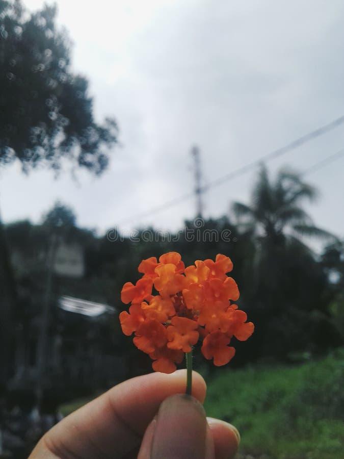 De oranje bloem stock afbeelding