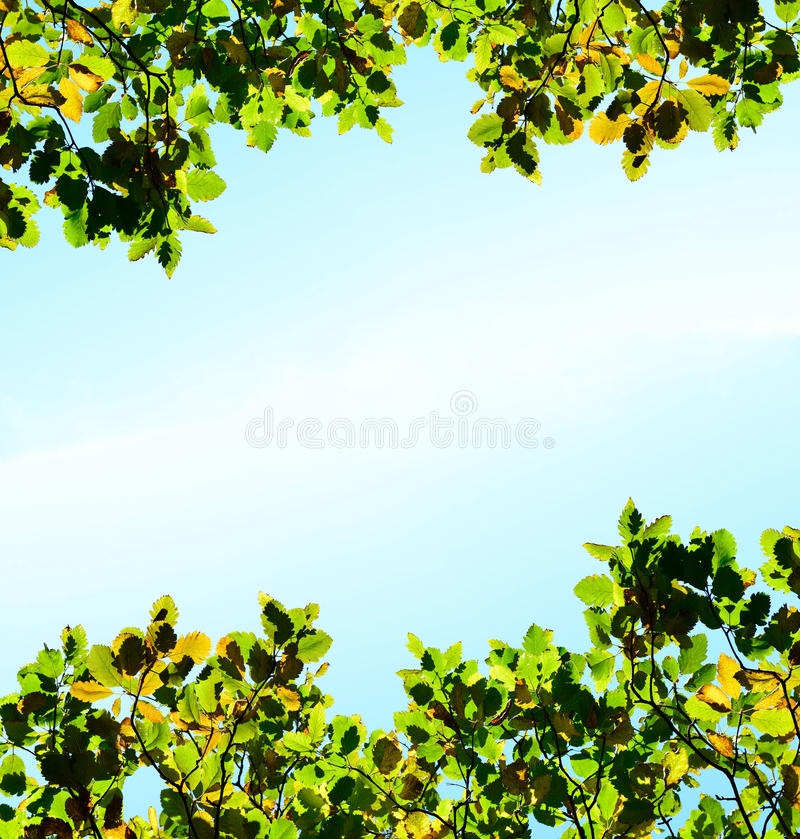 De oranje en groene bladeren van de herfst op hemelachtergrond stock afbeeldingen