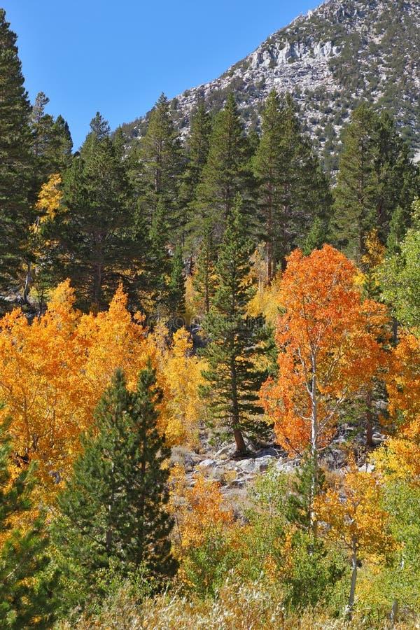 De oranje, gele en rode bomen royalty-vrije stock afbeeldingen
