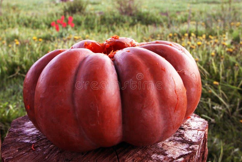 De oranje herfst royalty-vrije stock foto