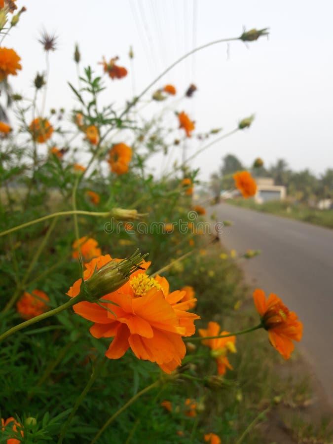 De oranje kant van de bloemweg royalty-vrije stock foto's
