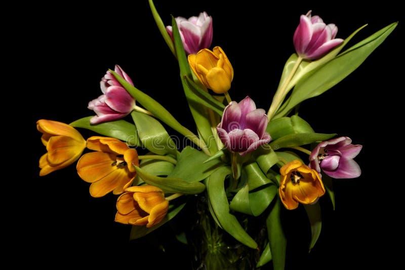 De oranje magenta zwarte achtergrond van het tulpenboeket stock foto