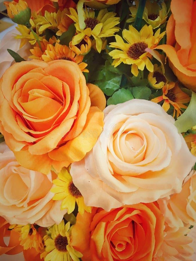De oranje mooie bloem van bloesemrozen bokeh royalty-vrije stock afbeelding
