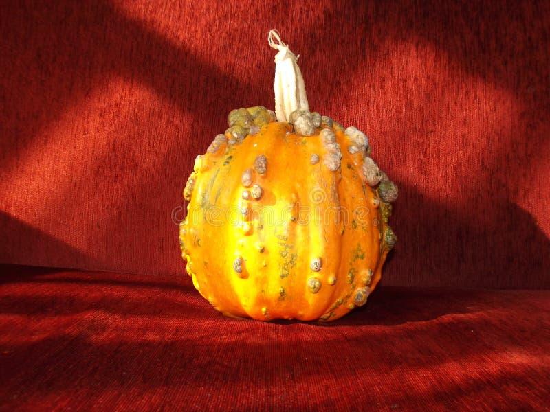 De oranje pompoen van Halloween en rode achtergrond royalty-vrije stock foto