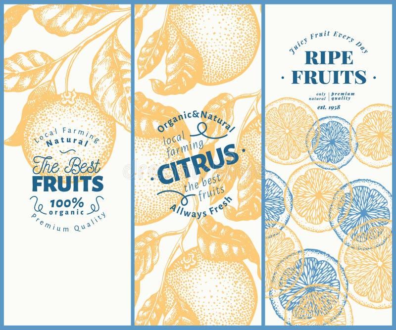 De oranje reeks van de fruitbanner Hand getrokken vectorfruitillustratie De gegraveerde achtergrond van de stijl uitstekende citr stock illustratie
