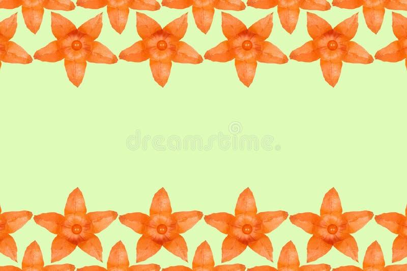 De oranje vlakke achtergrond van het physalispatroon, legt met exemplaarruimte royalty-vrije illustratie