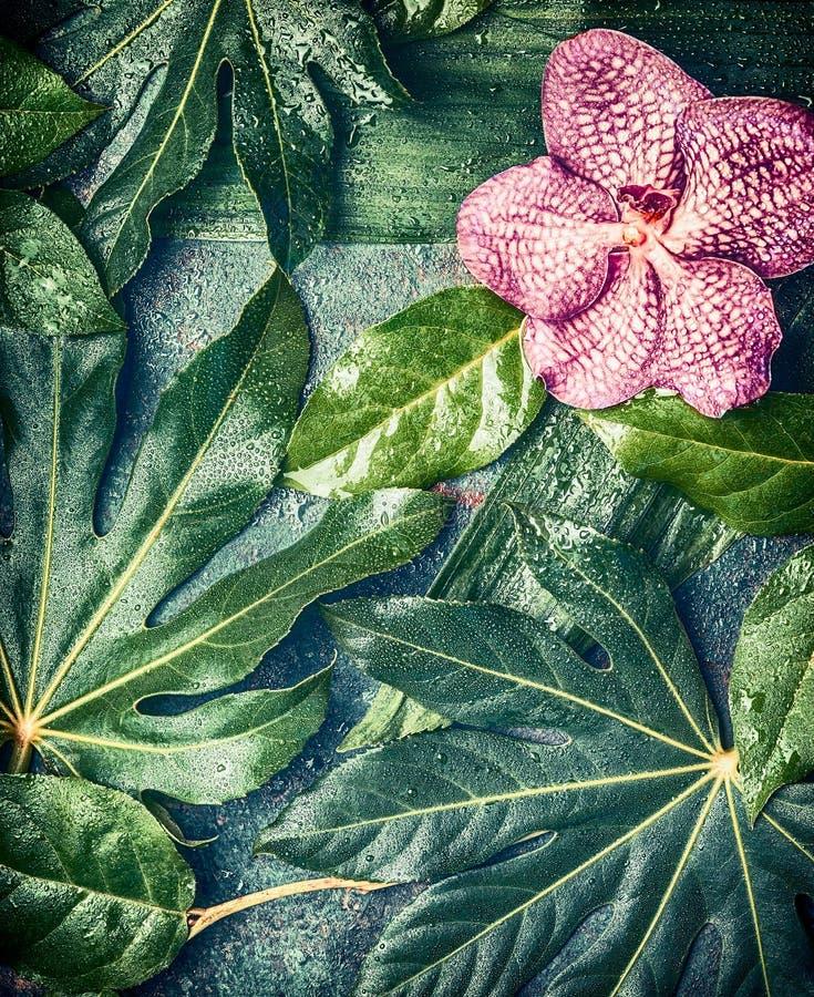 De orchidee bloeit op Creatieve tropische aardachtergrond met diverse palm en wildernisbladeren, hoogste mening stock fotografie