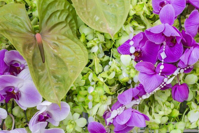 De orchidee is goed - gekend voor de vele structurele variaties in hun bloemen stock afbeelding
