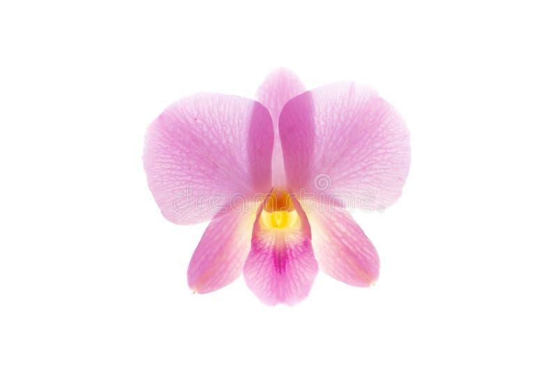 De orchidee isoleert op witte achtergrond royalty-vrije stock afbeeldingen