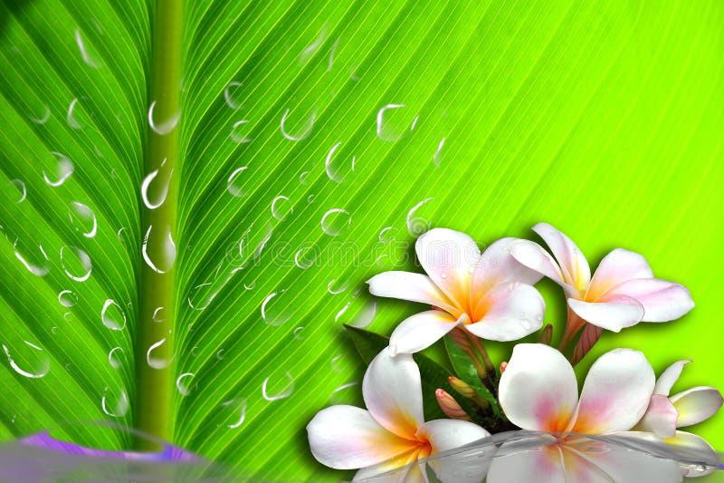 De orchidee van het water royalty-vrije stock foto