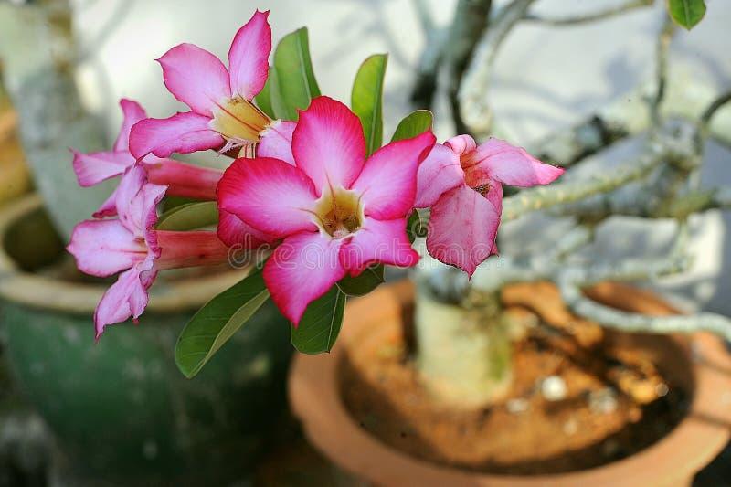 De Orchidee van mijn mum dichtbij de autoportiek royalty-vrije stock afbeelding