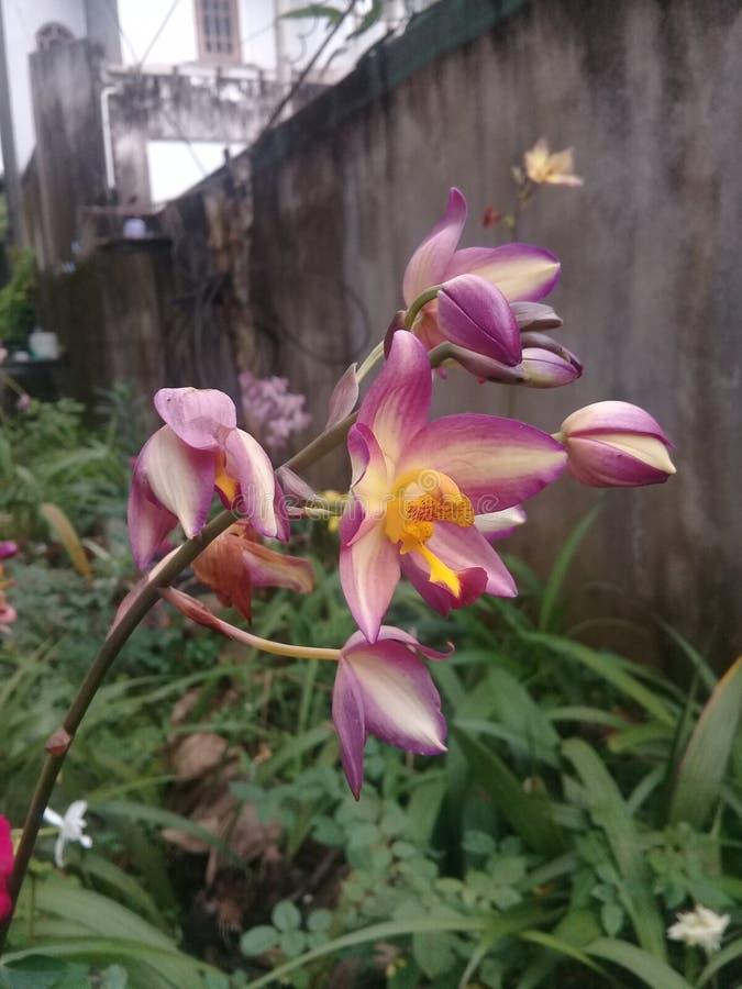 De orchideebloem stock fotografie