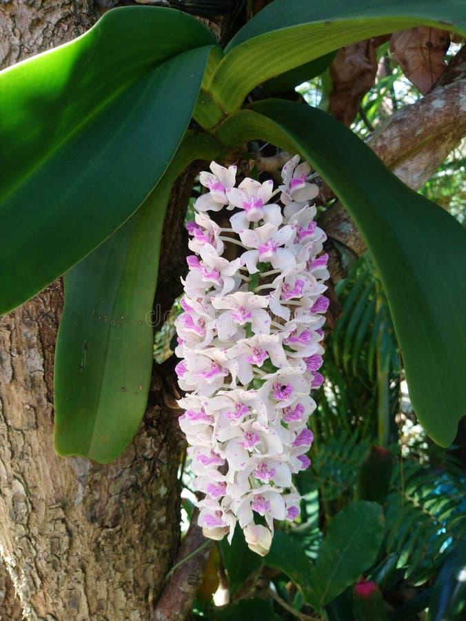 De orchideebloem royalty-vrije stock afbeelding