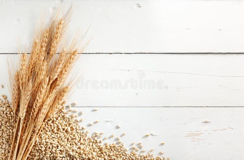 De oren en de korrels van de tarwe stock afbeelding