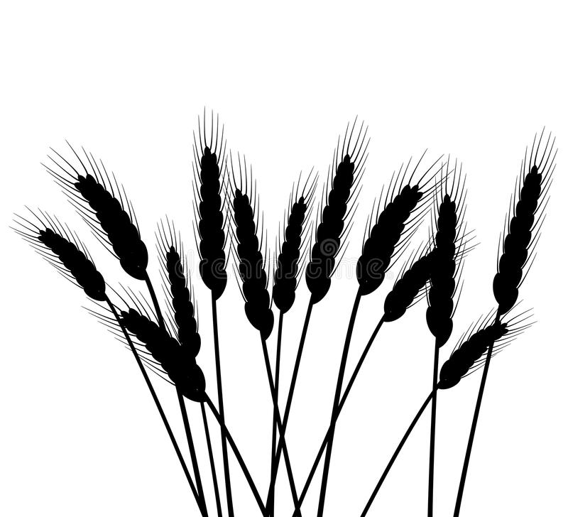 De oren van de tarwe vector illustratie