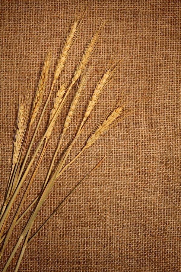 De oren van de tarwe stock afbeelding
