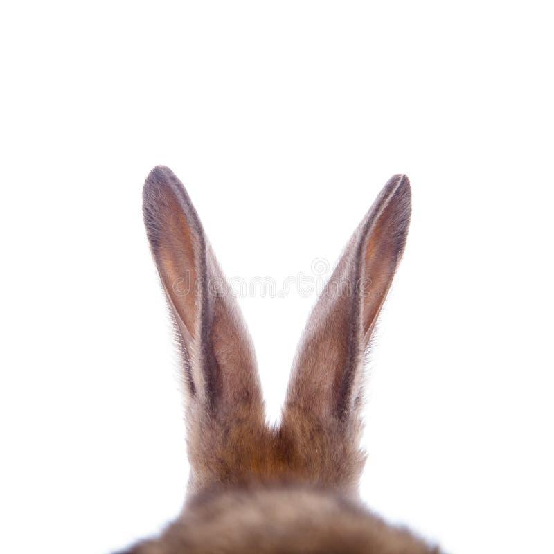 De oren van het konijn royalty-vrije stock fotografie