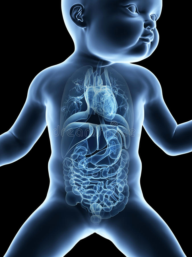 De organen van een baby stock illustratie