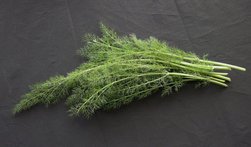 De organische Venkel van het Kruid royalty-vrije stock foto