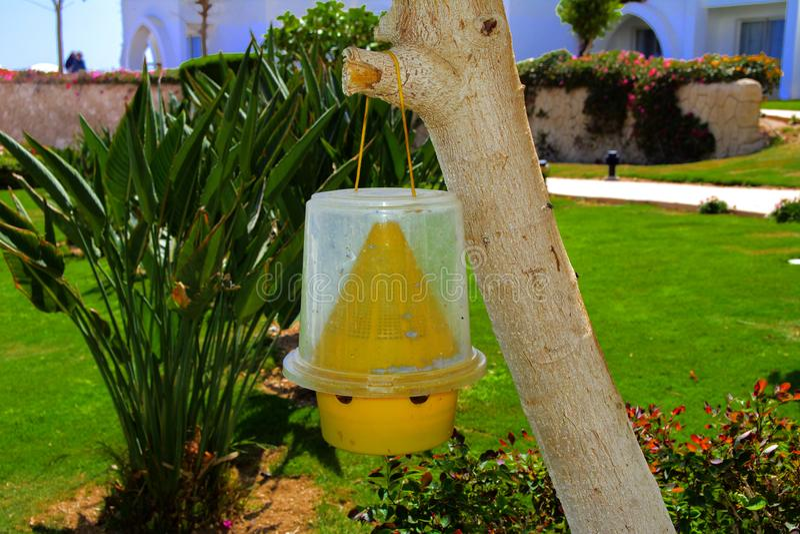 De originele ecologische val voor vliegen van geel plastiek hangt op een boom tegen een achtergrond van groen stock afbeeldingen