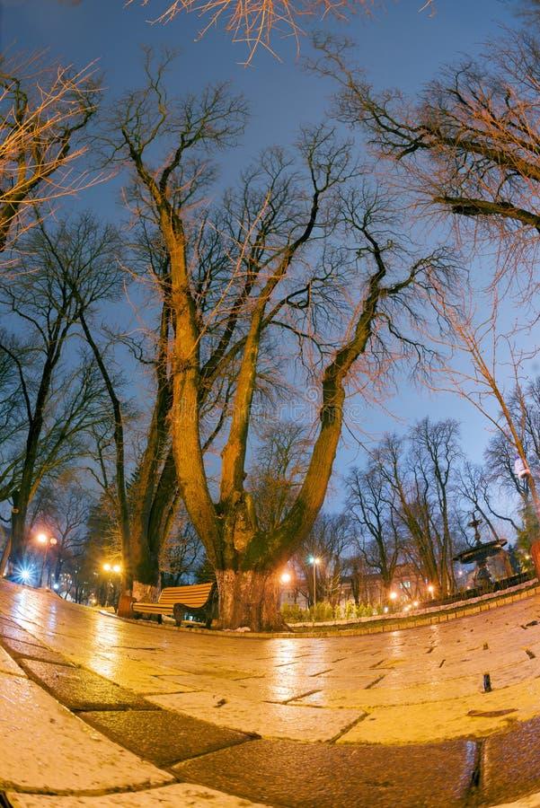 De originele natte straatstenen van de nachtmening royalty-vrije stock afbeelding