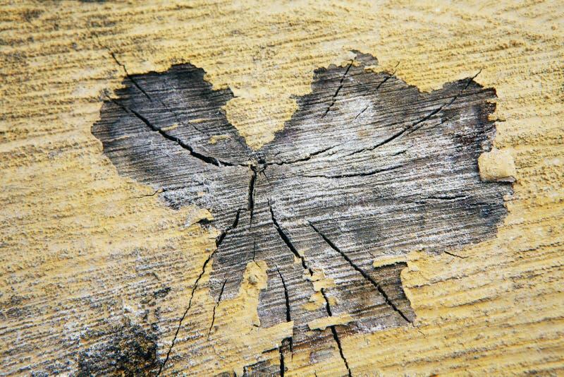 De oude achtergrond van de boomstomp royalty-vrije stock foto's