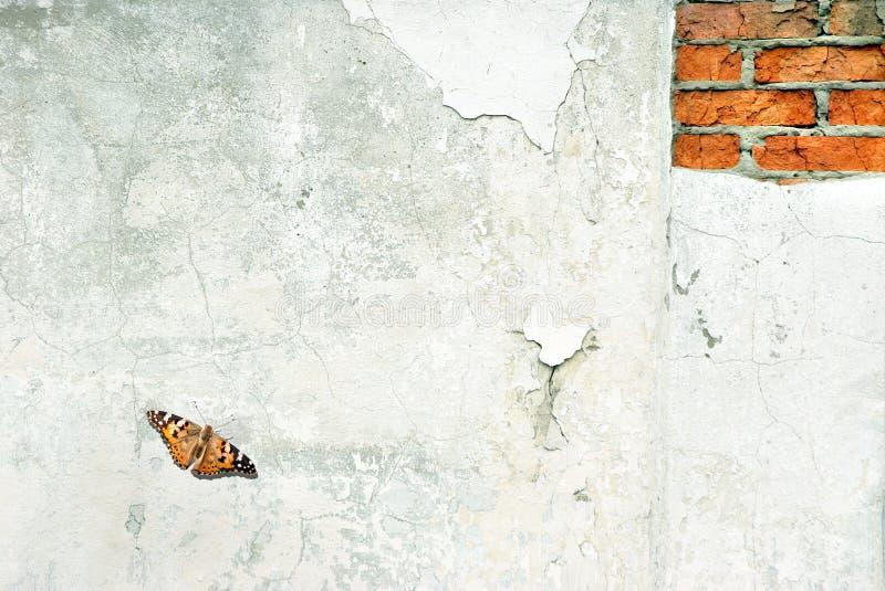 de oude achtergrond van de pleistertextuur Exemplaarruimten mooie oranje vlinder geschilderde dame op gepleisterd oud stock fotografie