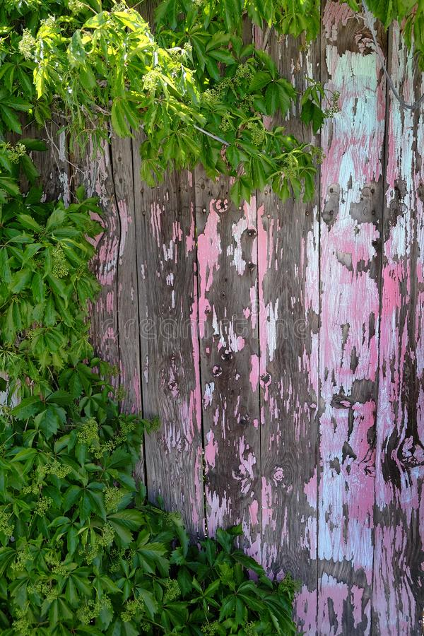 De oude Afgebroken Verf schilderde Houten Omheining Wall Rusty Nails met Gre royalty-vrije stock fotografie
